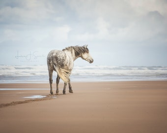 The Wanderer - Horse Print Fine Art Photography (Wall Decor, Equine Art, Horse photography)