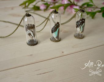 Butterfly Wings - Necklace - Bottle with butterfly wing - Gift Necklace - Pendant glass - butterfly - terrarium - real butterfly