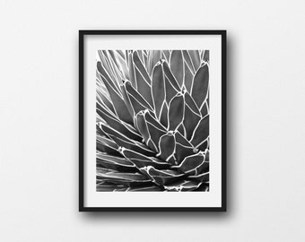 Botanical Print, Succulent Photo, Black and White, Agave Picture, Nature Photography, Nature Abstract, Home Decor, Southwest Art, Wall Art