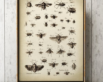INSECT POSTER, Fly Print, Flying Insects Drawing, Antique Scientific Insect Chart, Vintage Entomology Picture Wall Art