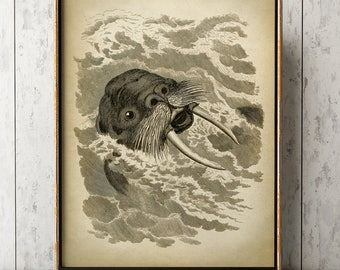 WALRUS print, WALRUS Poster, Marine Decor, Sea Life, Marine Mammal, Beach Home Wall Decor
