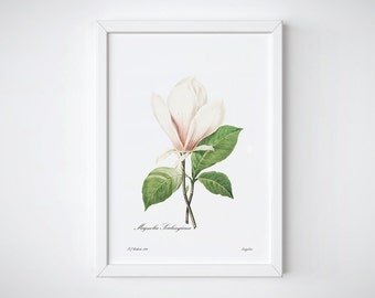 Fleur Print, Botanical Art Print, Botanical Illustration, Botanical Poster, Home decor, Antique Botanical Poster | Magnolia Soulangiana