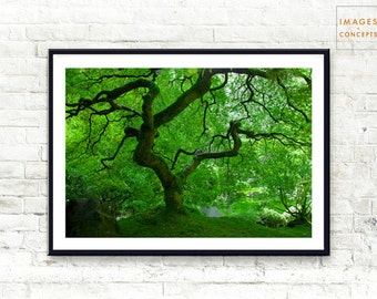 Green Nature Print ~ Japanese Maple Print ~ Tree Nature Photo ~ Portland Japanese Garden ~ Digital Print ~ Printable Art ~ Home Decor