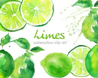 Watercolour Limes Clip Art, Hand Painted Limes Clip Art