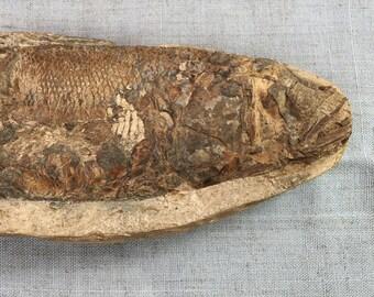 Fossilized Rhacolepis Buccalis - Cretaceous Era Fish Fossil - Brazil