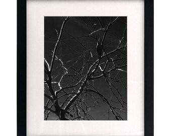 Bird (Framed & Matted)