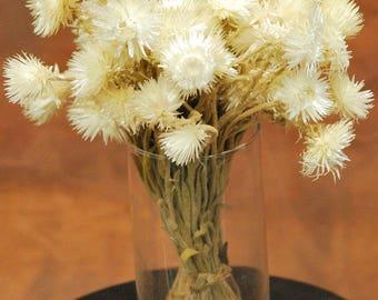 Everlasting Flowers | Helichrysum | Dried Flowers