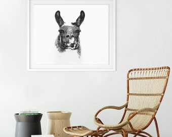 Llama Wall Art | Black and White Llama photograph | Modern Animal Print