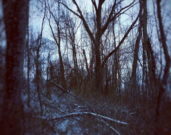 Winter Forest Print, winter scene, gloomy photo, bleak photo, bare winter trees, landscape photography, winter tree scene, forest scene