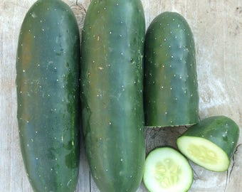 Straight Eight Cucumber American Standard Slicing Type Excellent Flavor Crisp and Juicy Rare Seeds
