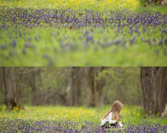 Digital Background  Yellow & Blue Grape Hyacinth Flower field -  Eliz Alex-  Instant Download, composite, stock