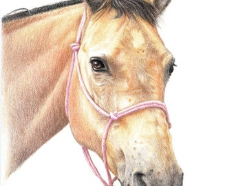 CUSTOM Sketched Horse Portrait + matching Card & Gift Tag, Horse lover Gift, Pony Portrait, Horse Drawing, Horse illustration, Horses