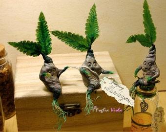 Mandrake etsy for Decor traduction
