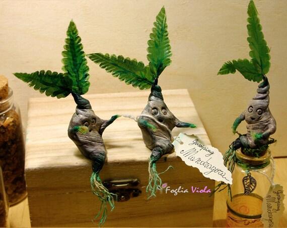 Racine de mandragore apothicaire poudlard herbology harry for Decor traduction