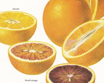 orange oranges citrus fruit juice vintage botanical art print fruit food kitchen decor by Marilena Pistoia 8 x 11 1/4 inches