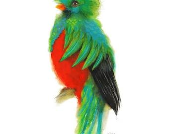 Quetzal watercolor - Green bird print, Colorful Bird Illustration, vibrant blue, green, and red,  Paradise Bird.