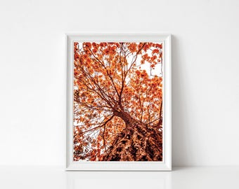 Autumn Tree Landscape print, Photography Wall Art Print, Large Printable Poster, Digital Download, Modern Decor