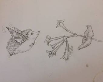 Hedgie Bird