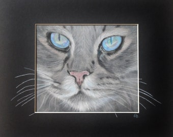Old Blue Eyes, study of a cat