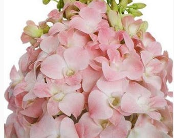 FRESH Pink Dendrobium Orchid, Pink Orchid, Wedding Orchid, Real Orchid, Dendro, Wedding Flowers, Fresh Flowers, Fresh Orchid, Pink Wedding