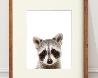 Raccoon print, PRINTABLE Nursery Art, Woodland animals, Animal art, Baby animals, Raccoon Poster, Baby Animal Print, Peekaboo Print
