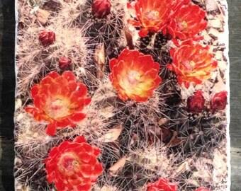Cactus Flowers Tile