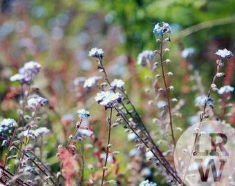 Fine Art Photography Blue Flowers Digital Download