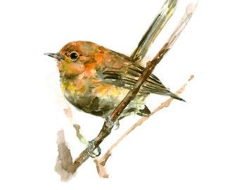 Kauai Elepaio watercolor painting - bird watercolor painting - 5x7 inch print - 0078