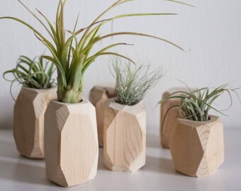 Holz-Diamant / Übertopf / Luftpflanze