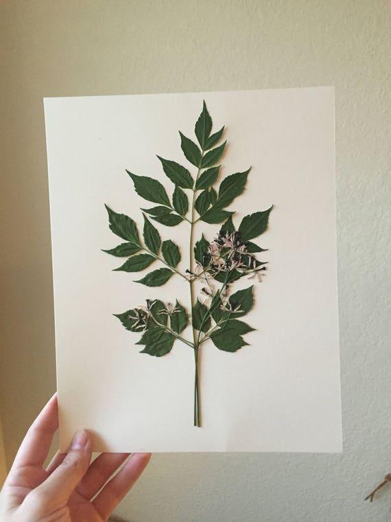 Texas Leaf Herbarium 8x10  - Pressed Texas Tree with Flowers - Victorian Botanical-  Framed Floral Art- Pressed Botanical Art- Specimen Art
