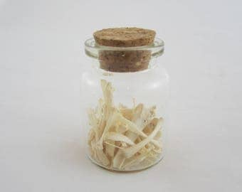 Jar of Rodent Bones from Owl Pellet