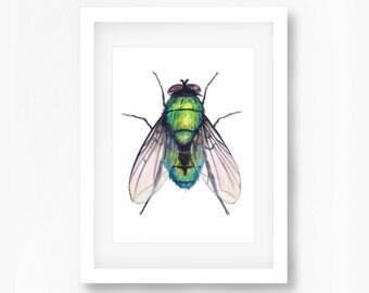 Green Bottle Fly Watercolor