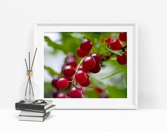Printable Wall Art, Red Berries Print, Nature Photography, Woodland Art, Red Berry Photograph, Kitchen Decor, Instant Download