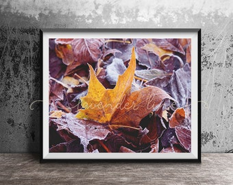 LITTLE RUSTIC MOMENTS, Colour Photography Print, Autumn Leaves, Winter Detail, Frozen, Enchanted, Magical, Home Decor, Wall Art