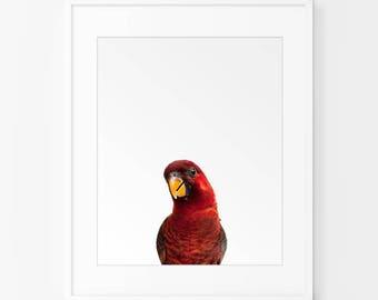 Printable Kids Gift, Parrot Print, Nursery Animal Wall Art, Kids Printable Art