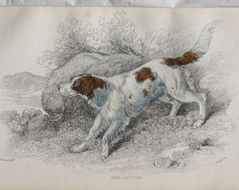 the setter dog antique print 1840