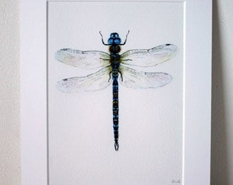 """Dragonfly, Fine Art Giclée Print, watercolour 8 X 10"""" by TheWildThingsArt"""