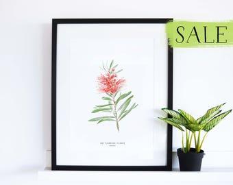 Bottlebrush Flower Print