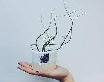 Monstera leaf pot