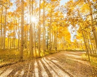 Colorado Landscape Photo, Colorado Aspen, Digital Download Photography, Travel Photography, Mountain Photography, Fall Landscape Photo,
