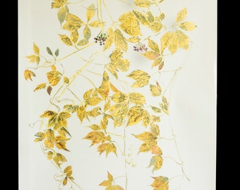 the vine painting