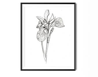 Iris Print, Flower Art, Botanical Illustration, Wall Art, Pen Ink Print, Floral Art, Botanical Print, Black White Flower Print, Flora Print