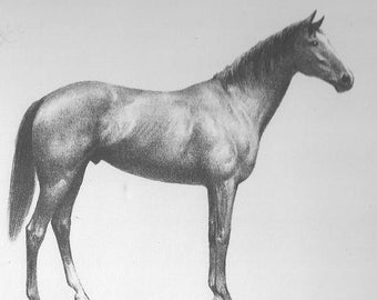 Horse Print CW Anderson Vintage Race Horse Thoroughbred Horse Racing Derby Equine Wall Art Vintage Equestrian Horse Decor 1940 Carbine