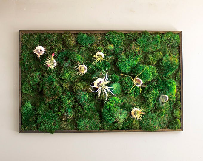"Moss Wall Art ~ Moss Art Work ~ REAL Preserved Moss ~ No Maintenance Required Moss ""Living"" Wall w/ Air Plants ~ 48x30"" ~ ""Air Bloom"""