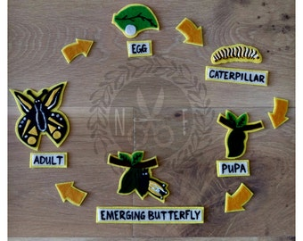 Caterpillar Life Cycle Felt Kit