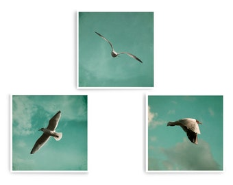 Bird Photo Art, Seaside Wall Art, Teal Wall Art, Set of 3 Prints, Beach House Decor, Coastal Wall Art, Square Art Prints, Wildlife Art Print