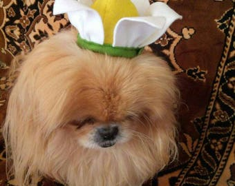 Flower hat for dog - Photo prop hats for dogs - Boho Hat