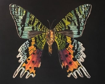 Madagascan Sunset Moth Chrysiridia rhipheus Original Oil Painting