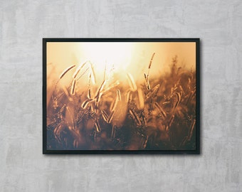 Gold Wheat, Gold Print, Wheat Photography, Beautiful Nature Photo, Wall Art Printable, Instant Download, Modern Art, Digital Print