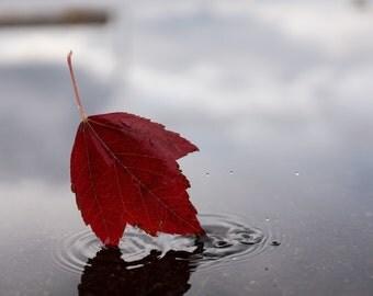Fall leaves, Fall photography, Autumn photography, Canvas print, Fall colors, Fall leaves photo, Fall home decor, Nature photo, Autumn leaf